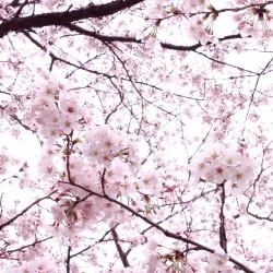 teshio paperのHPがH28年4月からリニューアル!!