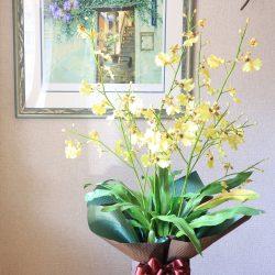 【SIBORI 栗色/鶯色 】鉢物をラッピング