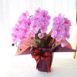 【SIBORI 紫紺色・曙色】花束ラッピングのご紹介
