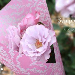 『シンフォニー ワインレッド』で花束ラッピング